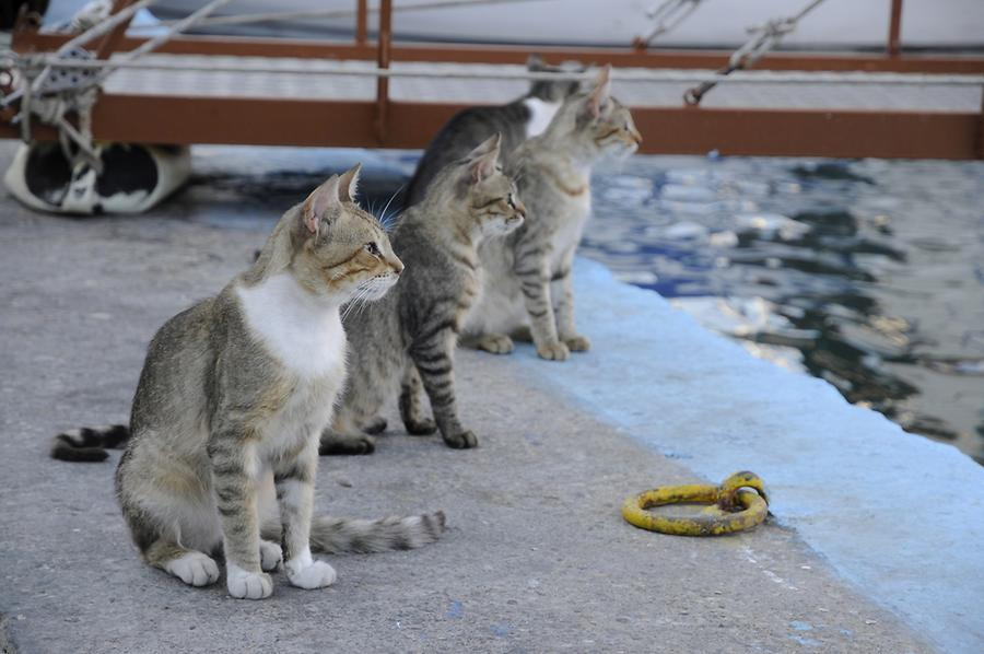 Cats in the harbour of Pythagorio