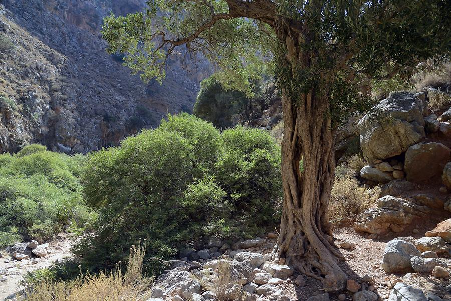 Zakros Gorge (Valley of the Dead)