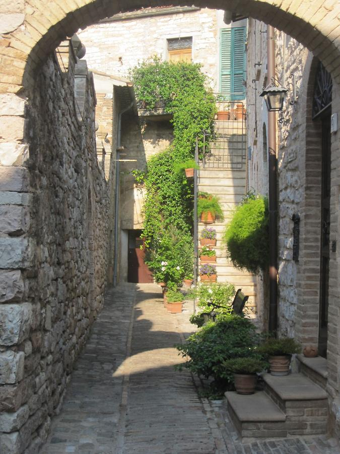 Backyard in Spello