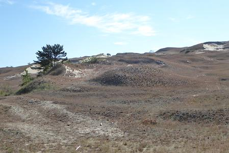 A bit north of Nida we walk up the 60 m high dune of Pervalka, still on the Curonian Spit., Photo: Hermann Maurer , 2016
