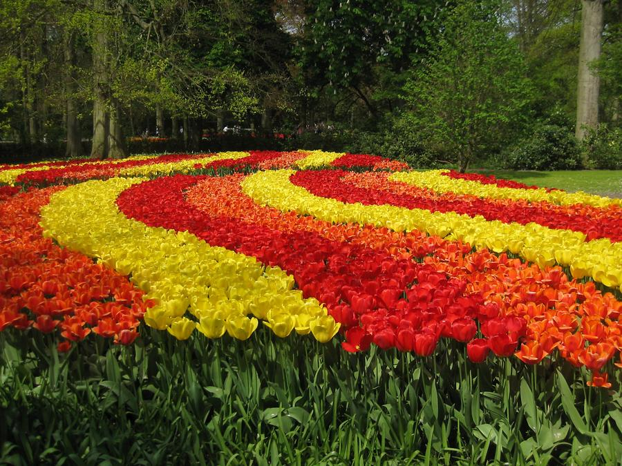 Keukenhof, red and yellow tulips