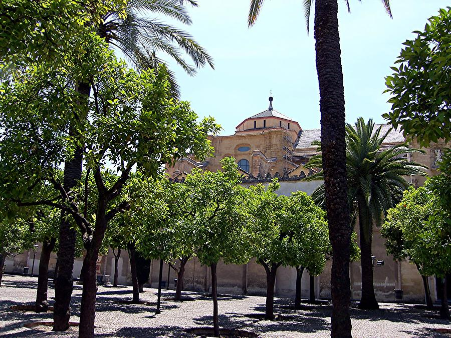 Cordoba Courtyard with Orange Trees