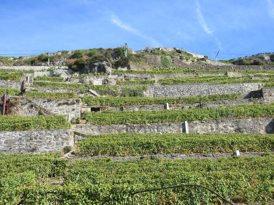 Vevey - Vineyards