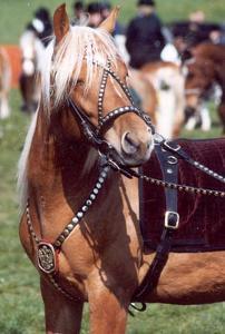Pferde-Forum.Org