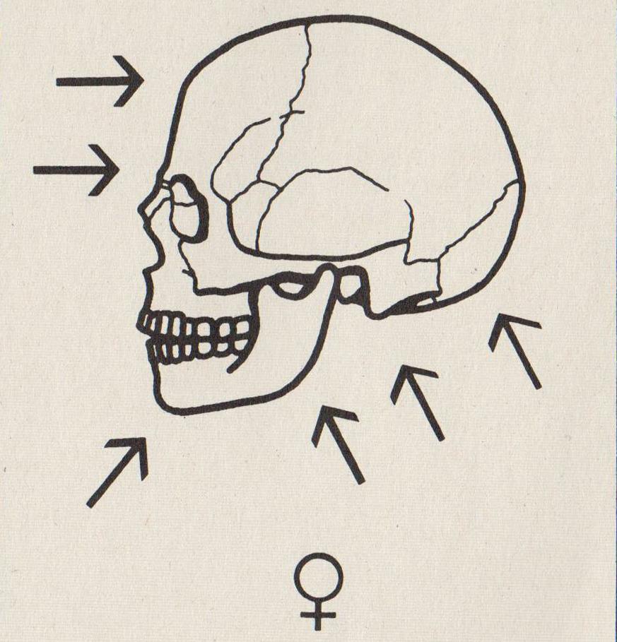 Anthropologie | Anthropologie, Archäologie und Museumspädagogik ...