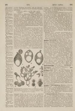 Bild der Seite - 292 - in Pierers Konversations-Lexikon - Haller-Kaltbrenner, Band 7