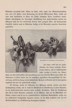 Image of the Page - 447 - in Die österreichisch-ungarische Monarchie in Wort und Bild - Bosnien und Herzegowina, Volume 22