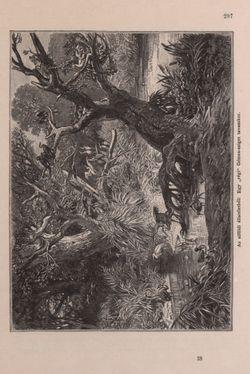 Image of the Page - 297 - in Az Osztrák-Magyar Monarchia írásban és képben - Bevezetö Kötet (I), Volume 2